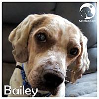 Adopt A Pet :: Bailey - Novi, MI