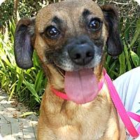 Adopt A Pet :: Luna - Key Largo, FL