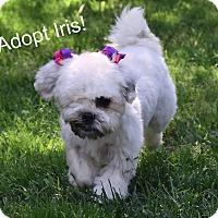 Adopt A Pet :: Iris - Concord, CA