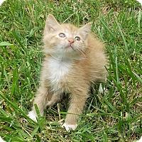 Adopt A Pet :: Tigger - Cherry Hill, NJ