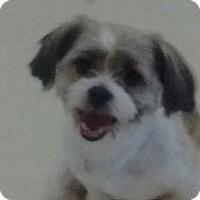 Adopt A Pet :: Hope - Newnan, GA
