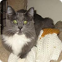 Adopt A Pet :: YOKO - 2014 - Hamilton, NJ