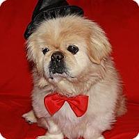 Adopt A Pet :: Jesse - Richmond, VA