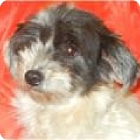 Adopt A Pet :: Socrates ADOPTED!! - Antioch, IL