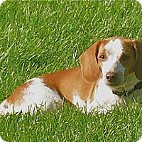 Adopt A Pet :: Zoey - Palm Bay, FL