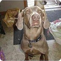 Adopt A Pet :: China - Attica, NY