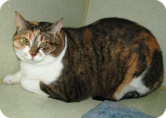 Domestic Shorthair Cat for adoption in Centre Hall, Pennsylvania - Sassy