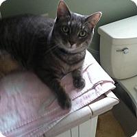 Adopt A Pet :: Bandit Girl - Plainville, MA