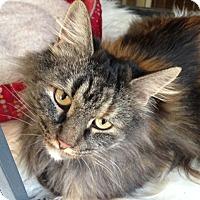Adopt A Pet :: Tessa - Chicago, IL