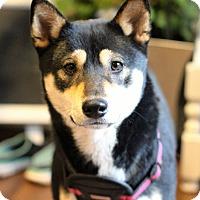 Adopt A Pet :: Rui - Manassas, VA
