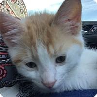 Adopt A Pet :: Layne - Greensburg, PA