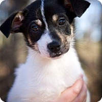 Adopt A Pet :: Cooper ~ADOPTED! - Saratoga Springs, NY