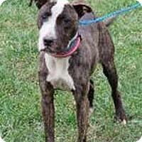 Adopt A Pet :: Wishbone - Chantilly, VA