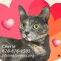 Adopt A Pet :: CHERIE - Monrovia, CA