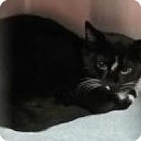 Adopt A Pet :: PieMay - Paducah, KY