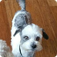 Adopt A Pet :: Shaggy - Adoption Pending - Gig Harbor, WA