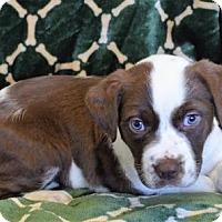 Adopt A Pet :: KIKI - New Iberia, LA