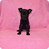 Adopt A Pet :: Dolly Parton - New Milford, CT