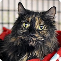 Adopt A Pet :: Ivy - Denver, CO