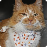 Adopt A Pet :: PUNKIN - Clayton, NJ