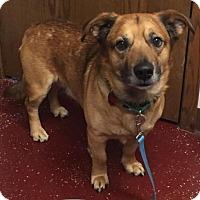 Adopt A Pet :: Atz - Fargo, ND