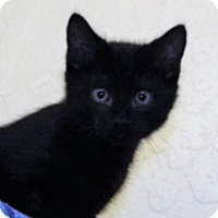 Adopt A Pet :: Rocky - Grants Pass, OR