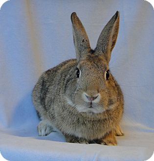 Other/Unknown Mix for adoption in Los Angeles, California - Hoppiness