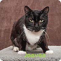 Adopt A Pet :: Jeeves - Battle Ground, WA