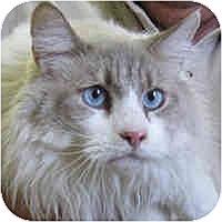Adopt A Pet :: Chance - Columbus, OH