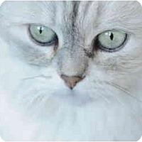 Adopt A Pet :: Mitsy - Columbus, OH