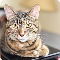 Adopt A Pet :: Ashlee - Xenia, OH