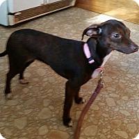 Adopt A Pet :: Rosie - Tillamook, OR