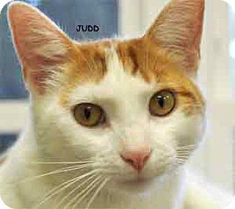 Domestic Mediumhair Cat for adoption in Warren, Pennsylvania - Judd