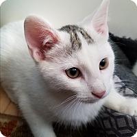 Adopt A Pet :: Lincoln - Greensburg, PA