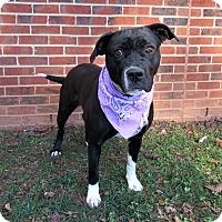 Adopt A Pet :: MARY - Lexington, NC
