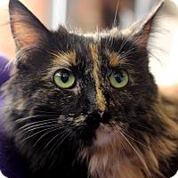 Adopt A Pet :: Rocky Raccoon - Flushing, MI
