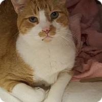 Adopt A Pet :: Furnando - Washburn, WI