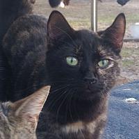 Adopt A Pet :: Mellow - Bronson, FL