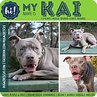 Adopt A Pet :: Kai - New Port Richey, FL