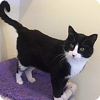 Adopt A Pet :: Yuri - Colorado Springs, CO