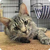 Adopt A Pet :: Naveen - Reeds Spring, MO
