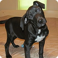 Adopt A Pet :: Gavin - Glenwood, GA
