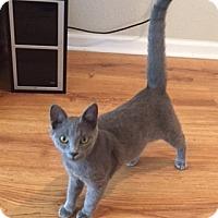 Adopt A Pet :: Tobias - San Antonio, TX