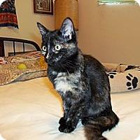 Adopt A Pet :: Mary Ann - San Pedro, CA