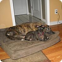 Adopt A Pet :: D Ark Rennie - Knoxville, TN