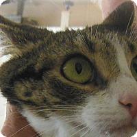 Adopt A Pet :: Samantha - Sanford, ME