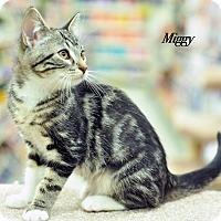 Adopt A Pet :: Miggy - Ortonville, MI