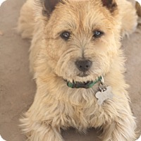 Adopt A Pet :: Tucker - MEET HIM - Norwalk, CT