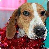 Adopt A Pet :: Franklin - Erwin, TN
