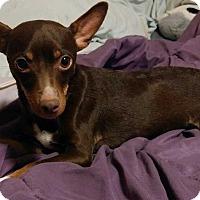 Adopt A Pet :: Precious - Concord, CA